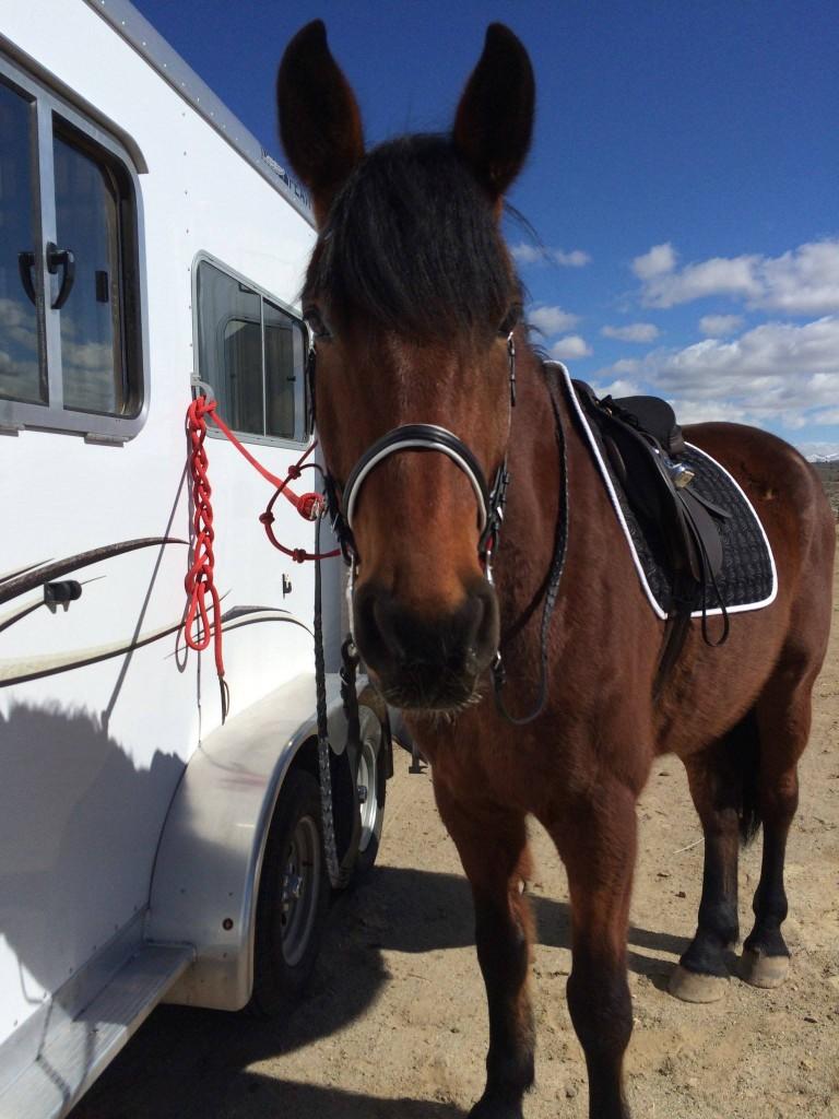 """My very own horse, Obi. """"Got ears?"""""""