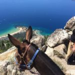 Gus the Mule and Deby looking down at Sand Harbor